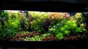 Удобрения(микро,  макро,  калий,  железо) для аквариумных растений. ПОЧ1