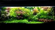 Удобрения(микро,  макро,  калий,  железо) для аквариумных растений. Поч7