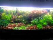 Удобрения(микро,  макро,  калий,  железо) для аквариумных растений. П0ч/