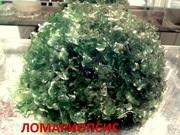 Аквариумные растения. Папоротник ломариопсис. Наборы для запуска. ПОЧ-